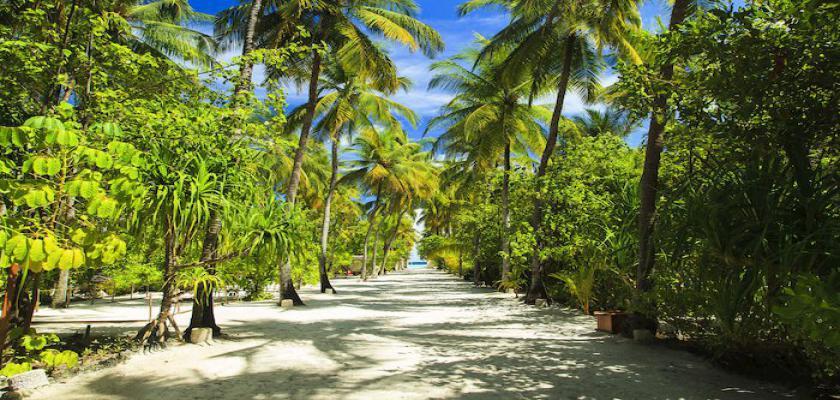Maldive, Male - Seaclub Maayafushi 2