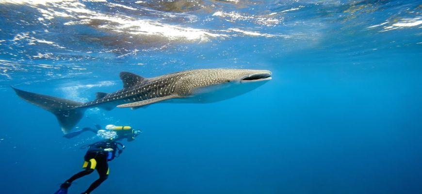 Maldive, Male - Veraresort Dhigufaru 4