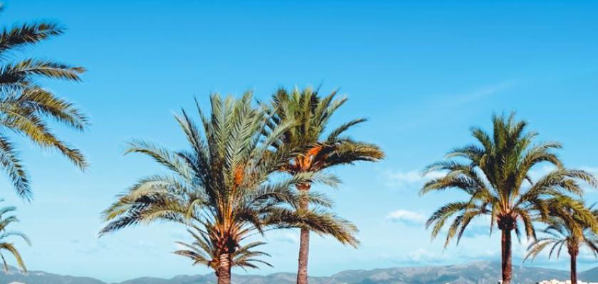 Spagna - Baleari, Maiorca - Hotel Linda 0
